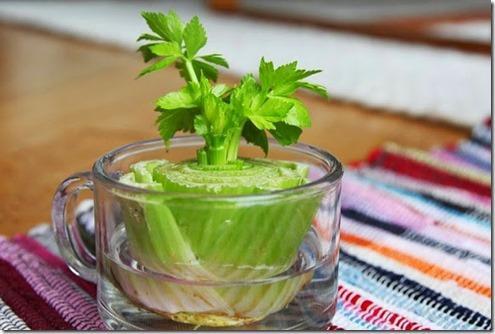 6. Celery