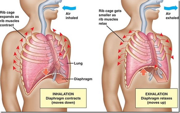 The Importance Of Proper Breathing Is Underrated 5 Ways To Breathe Properly