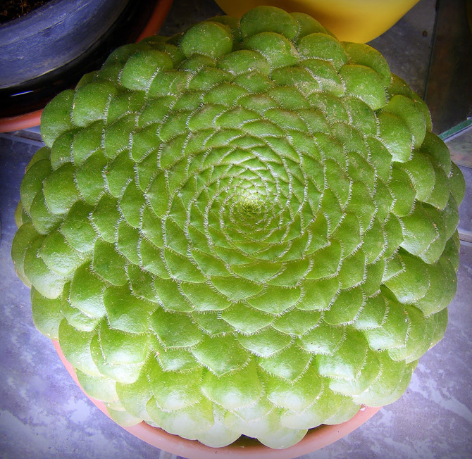 25 Stunning Photographs Of Sacred Geometry In Nature