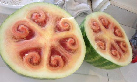 Wild watermelon