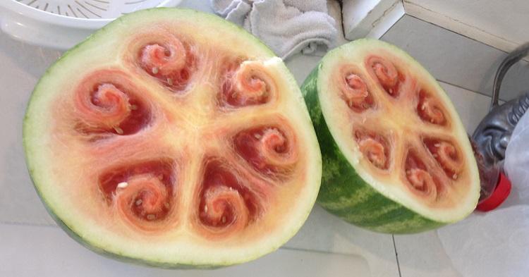 Wild Melon - Mobil6000