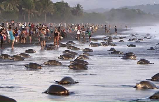 Turtles-3-