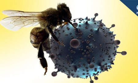 Scientists at the Washington University School of Medicine in St. Louis found that melittin, a toxin found in bee venom, physically destroys the HIV virus, a breakthrough that could potentially lead to drugs that are immune to HIV resistance.