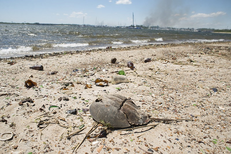broken-glass-bottles-old-shoes-and-crab-carapaces-form-a-thick-layer-of-waste-on-the-sand-stretching-as-far-as-you-can-see-in-any-direction