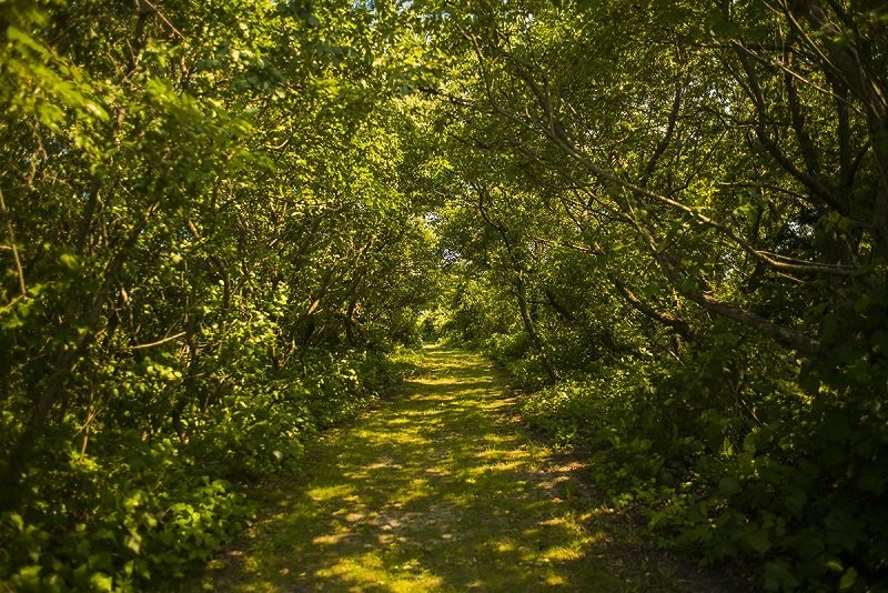 to-enter-the-bay-you-first-walk-through-some-of-the-most-lush-green-paths-found-anywhere-in-new-york