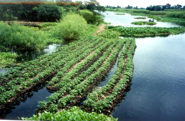 Chinampas, The Ingenious Floating Gardens Of The Ancient ...