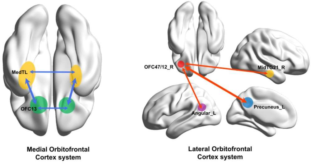 """The human medial (reward-related, OFC13) and lateral (non-reward-related, OFC47/12) orbitofrontal cortex networks that show different functional connectivity in patients with depression."" University of Warwick"