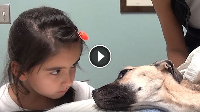 Image result for She Stares Into The Eyes Of A Dying Dog. What Follows Seconds Later Is A Miracle!